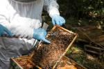 bill-aven_event-1004_beekeeper-tasting-session_pointing-out-the-queen_ff2017_9567