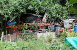 bill-aven_event-701-hidden-gardens-5-north-parade-allotments_ff2017_9319
