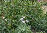 bill-aven_event-701_hidden-gardens_vallis-vale-allotments_ff2017_9306