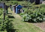bill-aven_event-701_hidden-gardens_welshmill-allotments_ff2017_9300