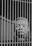 Imprisoned in Concrete