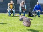 Great Grey Owl by Alan Denison