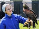 Sue and Harris Hawk Molly by Alan Denison